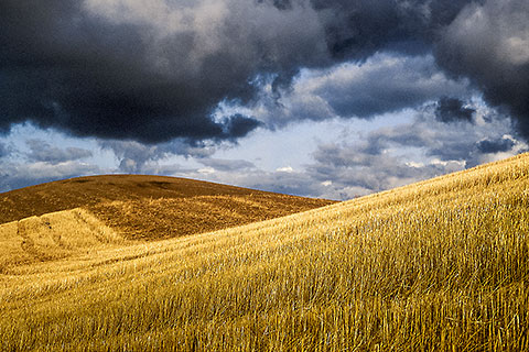 Wheat fields & stormy sky [©1991 paulgodard.com]