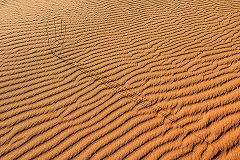dune & sand pattern + shadow of dead shrub [©2005 paulgodard.com]