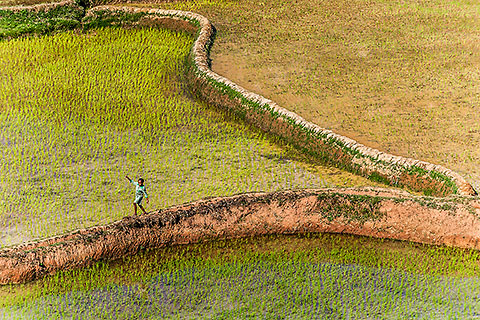 girl walking between paddy field [©2010 paulgodard.com]