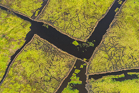 aerial landscape | pool covered by grass cut by fishermen [©2012 paulgodard.com]