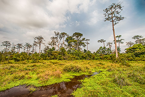 vegetation along Lango stream [©2014 paulgodard.com]