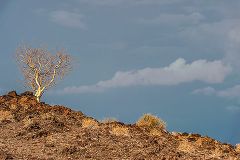 tree on rocky hill | storm clouds [©2016 paulgodard.com]