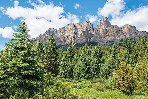 pine tree forest & Castel mountain [©2017 paulgodard.com]