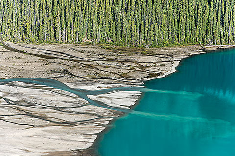 pine tree forest along river delta flowing into Peyto lake [©2017 paulgodard.com]