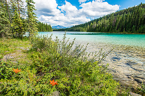 wood lily flower on lake #1 shore with clear blue water [©2017 paulgodard.com]