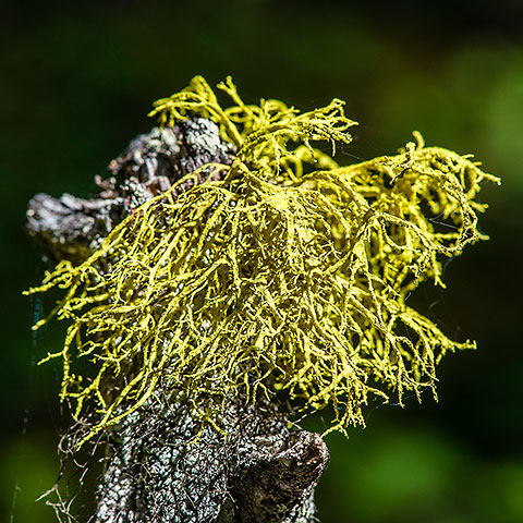 lichens on dead wood [©2017 paulgodard.com]