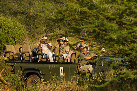 guests in game vehicle watching male lions under tree [©2008 paulgodard.com]