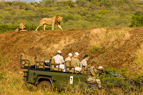 guests in game vehicle watching lions [©2008 paulgodard.com]